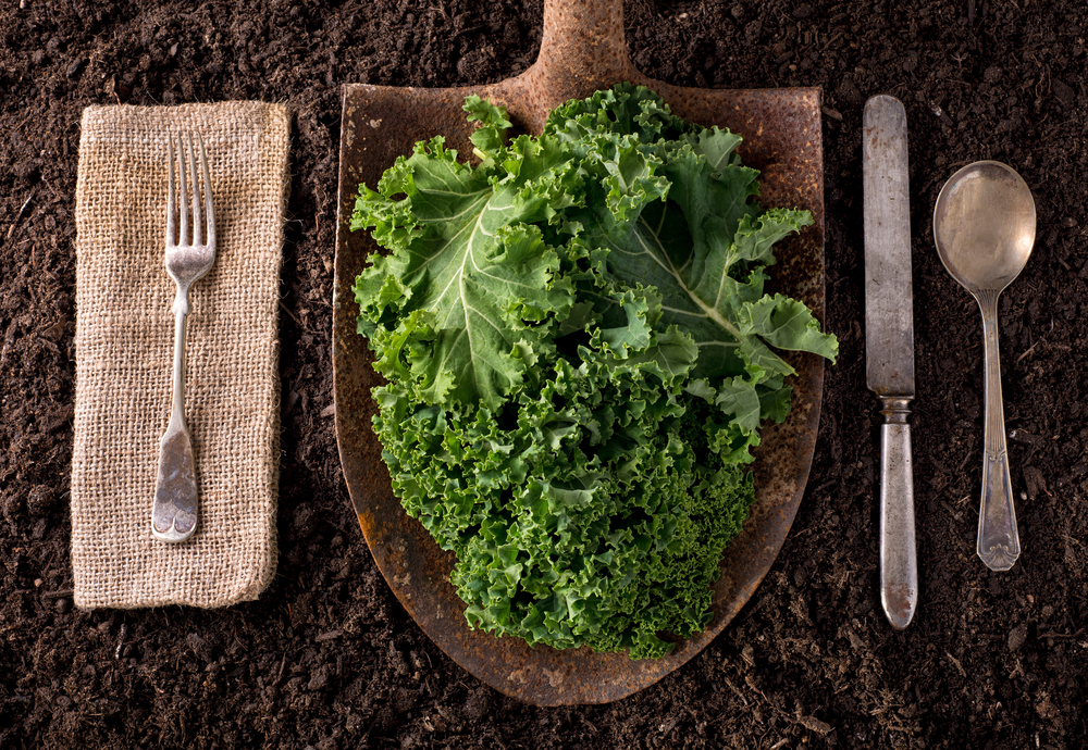 Healthy-soil catering san diego wedding catering